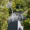 Wellington, Botanic Gardens.